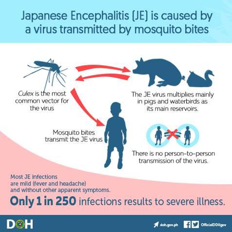 Penularan Japanese Encephalitis